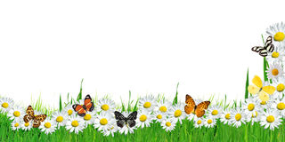 Frame butterflies and flowers isolated background Royalty Free Stock Photo