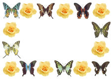 Frame butterflies and flowers isolated background Stock Images