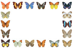 Frame butterflies isolated background Stock Images