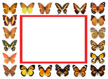 Frame butterflies isolated background Royalty Free Stock Images