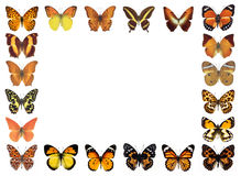 Frame butterflies isolated background Stock Photo