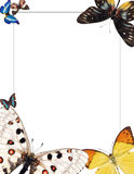 Frame with butterflies for photomontage Royalty Free Stock Image