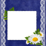 Frame with camomile on the darkblue background. White frame with camomile, leaf and white laces on the darkblue background Royalty Free Stock Image