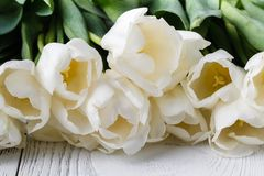 Frame for card with natural white tulips Royalty Free Stock Image