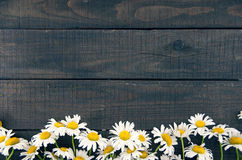 Frame of chamomile flowers on dark rustic wooden background with Royalty Free Stock Image