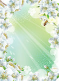Frame with cherry blossom stock illustration
