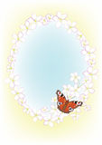 Frame of the cherry blossom and butterfly Stock Photo