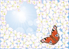 Frame of the cherry blossom and butterfly Stock Images
