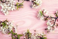 Frame of cherry blossoms branches on pink wooden background. Cop Royalty Free Stock Photo