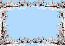 Frame of cherry blossoms. Collage of cherry blossoms, horizontal royalty free illustration