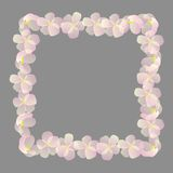 Frame with cherry flowers Royalty Free Stock Images
