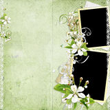Frame with cherry flowers on the old paper stack Royalty Free Stock Images