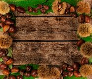 Frame of chestnuts, leaves and chestnut bur. royalty free stock images