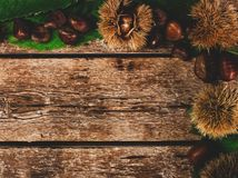 Frame of chestnuts, leaves and chestnut bur. royalty free stock photos