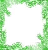 Frame of christmas tree branch Stock Photo