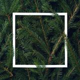 Frame of Christmas tree branches stock photography