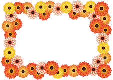 Frame of chrysanthemums. Frame of bright yellow and orange flowers on a white background Royalty Free Stock Image