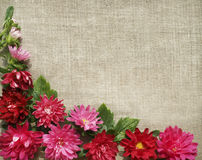 A frame from chrysanthemums Stock Photo