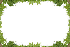 Frame of the climbing plant isolated on. White background Royalty Free Stock Photos