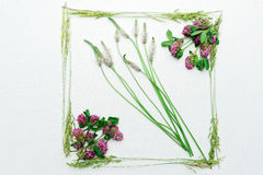 Frame with clover and field grass on white background Royalty Free Stock Photography