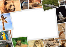 Frame with collection of wild animals. Photography Royalty Free Stock Photo