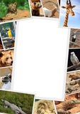Frame with collection of wild animals. Photography Royalty Free Stock Image