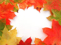 Frame with colored autumn maple leaves Stock Image