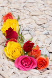 Frame of colored rose blossoms Stock Images