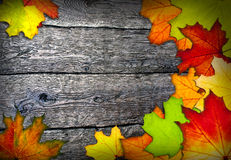 Frame of colorful autumn leaves Stock Images