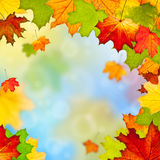 Frame of colorful autumn leaves. Against blue sky Royalty Free Stock Photography