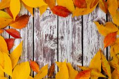 Frame of colorful autumn leaves on rustic white wood Royalty Free Stock Image