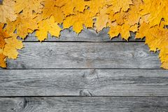 Frame of colorful autumn maple leaves closeup on wooden background. Stock Photography