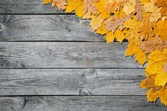 Frame of colorful autumn maple leaves closeup on wooden background. Stock Photo
