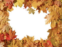 Frame of colorful autumn maple leaves Royalty Free Stock Photo
