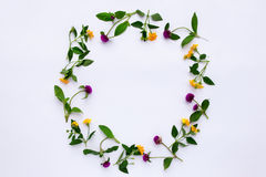 Frame Colorful bright pattern of meadow herbs and flowers on white background. Flat lay, top view. Stock Images