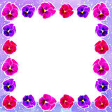 Frame of colorful flowers Royalty Free Stock Images