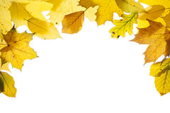 Frame with colorful leaves at autumn Royalty Free Stock Image