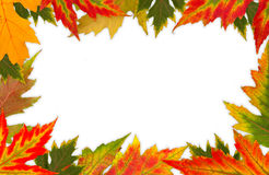 Frame of the colorful leaves. On a white background royalty free stock image