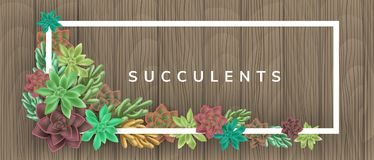 Frame with colorful succulent plants on wood background. Frame with colorful succulent plants on wood texture background. Vector illustration for natural design Royalty Free Stock Images
