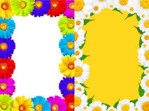 Frame of  colorful  summer camomile and gerbera Stock Images