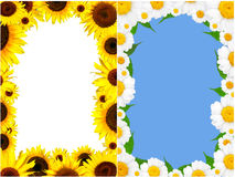 Frame of  colorful  summer camomile and sunflower Stock Photography