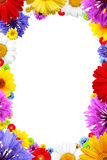 Frame of  colorful  summer flowers Royalty Free Stock Image