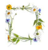 Frame from colorful summer flowers royalty free stock images