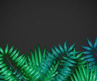 Frame of colorful tropical leaves. Concept of the jungle for the design of invitations, greeting cards and wallpapers. Stock Photos