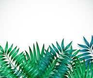 Frame of colorful tropical leaves. Concept of the jungle for the design of invitations, greeting cards and wallpapers. Royalty Free Stock Photo