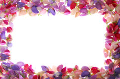Frame colorido das pétalas foto de stock royalty free
