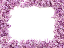 Frame from colors of a lilac Stock Photography