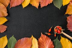 Frame composed of autumn leaves over black stock images