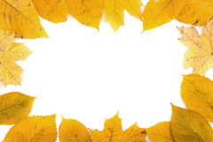Frame composed of colorful autumn leaves isolated on white backg Stock Photography