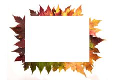 Frame composed of colorful autumn leaves over white stock photography